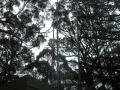 vk3rba_23cm_temp_antenna.jpg